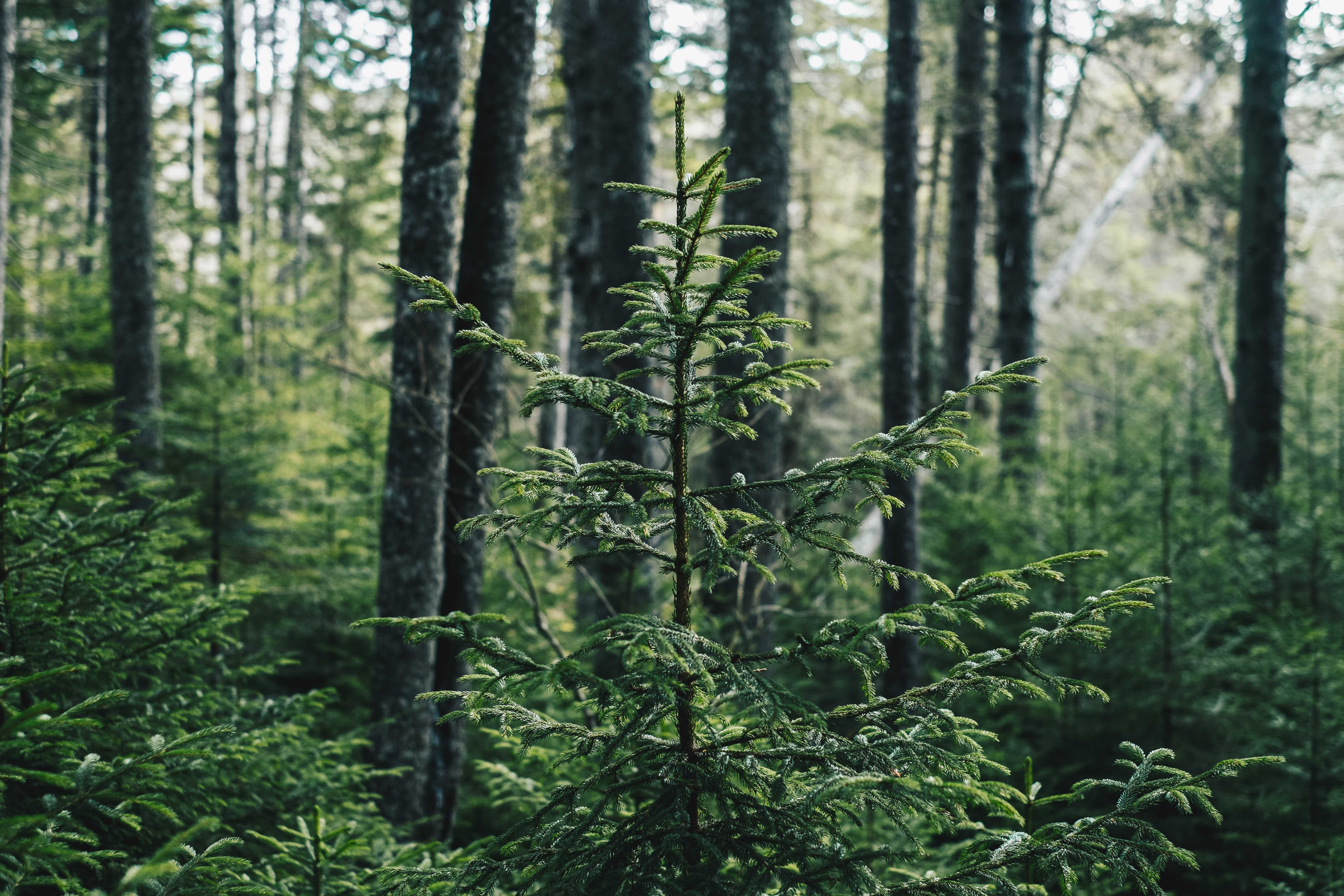 evergreen content gets it's name from evergreen trees, and is a great way to ensure long lasting content for your site.